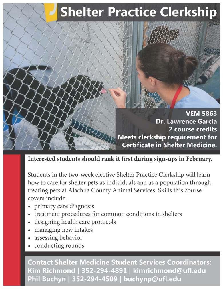 shelter practice clerkship flyer